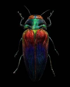 Macro insect shots made of 10000 separate photos with a for Levon biss miscrosculpture insects