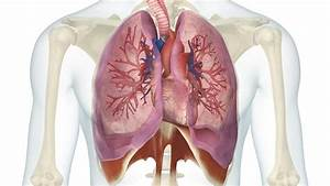 What Is The Relationship Between The Heart And The Lungs