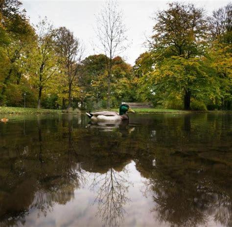 Englischer Garten Randalierer by Randalierer L 246 Sen Gro 223 Einsatz Im Englischen Garten Aus Welt