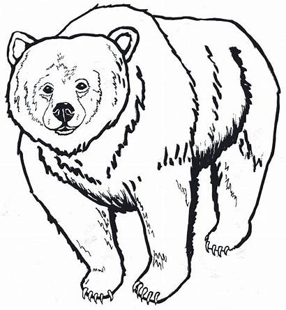 Bear Outline Clipart Drawing Head Brown Grizzly