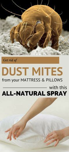 How to Get Rid of Dust Mites in Your Mattress