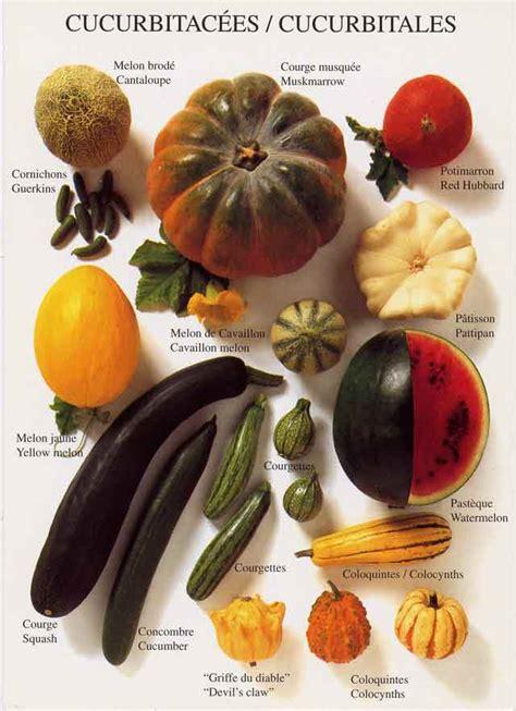 legumes de la famille des potirons potimarrons potirons courges citrouilles et autres cucurbitac 233 es natures paul keirn