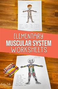 Free Muscular System Worksheets