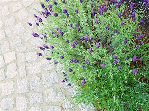 Pflanzen Für Mediterranen Garten by Der Mediterrane Garten