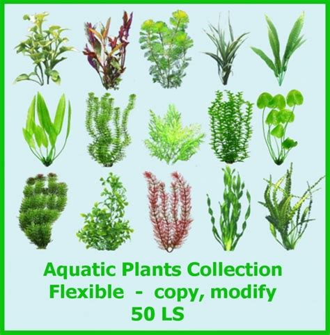 Grow Ls For House Plants by Pics For Gt Underwater Plants With Names