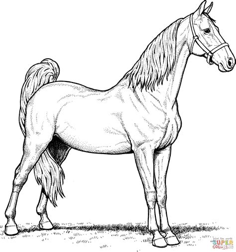 American Saddlebred Mare Horse Coloring Page Free