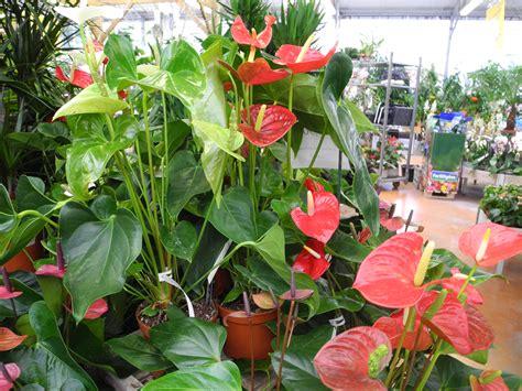 pr 233 sentez vos plantes d int 233 rieur ou d 233 polluantes jardiner avec jean paul