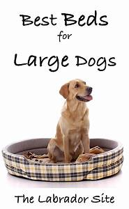 Best furniture for dogs best dog beds for large dogs that for Best dog beds for puppies that chew