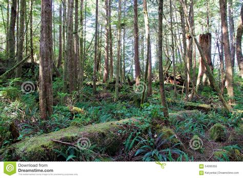 Hot Springs Cove Cground lush green forest at hot springs cove near tofino canada
