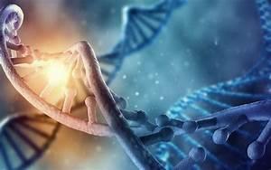 Les nanomachines naturelles réparatrices d'ADN nous ...
