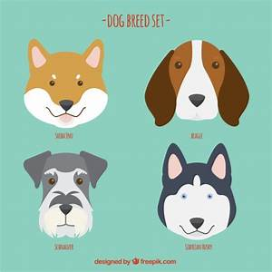 Husky Vectors, Photos and PSD files   Free Download