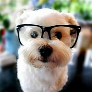 Cute Puppy Dogs for Kids