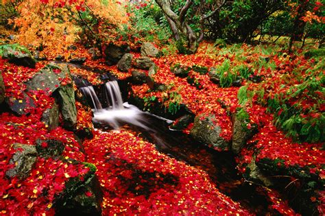 Beautiful Fall Backgrounds Hd by Leaves Beautiful Fall Landscapes Hd Wallpapers Hq