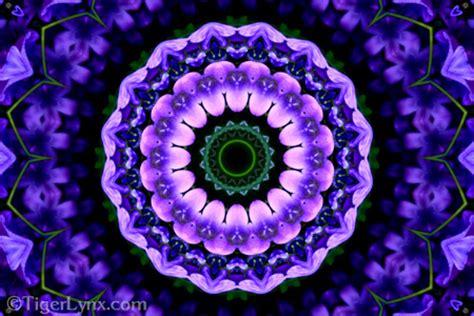 purple blue flower kaleidoscope mandala