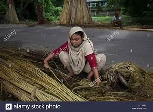 Was Ist Jute : frauen die verarbeitung von jute aus jute pflanzen jute in bangladesch hei t the golden fiber ~ Pilothousefishingboats.com Haus und Dekorationen