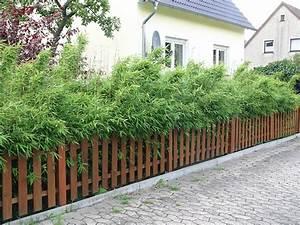 Gartenzaun Höhe Zum Nachbarn : fargesia 39 flamingo 39 als blickdicher sichtschutz die hecke ~ Lizthompson.info Haus und Dekorationen