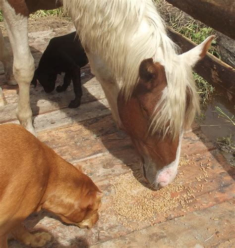 horses dog dogs along breeds five mares breakfast sharing most