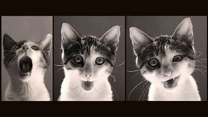 Funny Cat Desktop Wallpapers