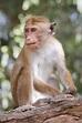 Monkey - Wikipedia