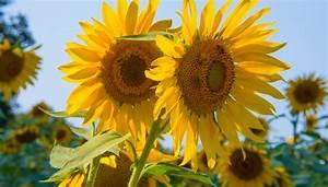 Welche Blumen Blühen Im August : blumen august diese blumen solltest du nicht verpassen ~ Orissabook.com Haus und Dekorationen