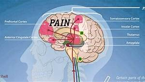 Pain Pathway - Please Read Description