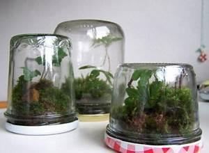 Moos Für Aquarium : omem seaweed kugeln glas flaschen algen moos kugeln glas aquarium terrarium bunte ~ Frokenaadalensverden.com Haus und Dekorationen