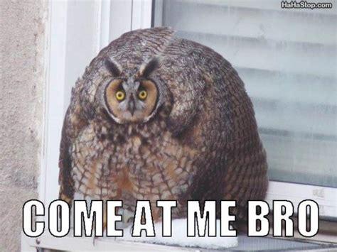 Owl Meme - weak thrust better know a meme come at me bro