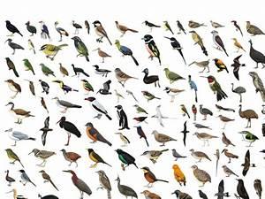 All Birds Images Wwwimgkidcom The Image Kid Has It