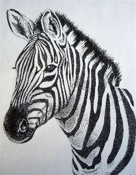 zebra sketch zebra stippling art zebra drawing