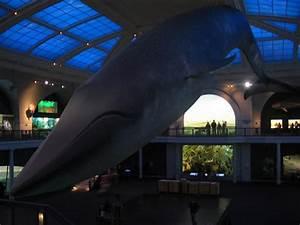 Milstein Hall of Ocean Life, 1st Floor, American Museum of ...