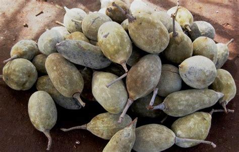 Baobab Fruit Tastes Like