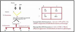 What is the difference between genotype and phenotype and ...