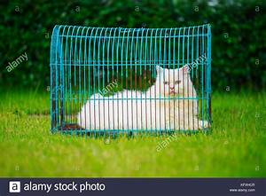 Weißer Wurm Katze : wei er perser katze im k fig auf dem gras feld stockfoto bild 164697591 alamy ~ Markanthonyermac.com Haus und Dekorationen