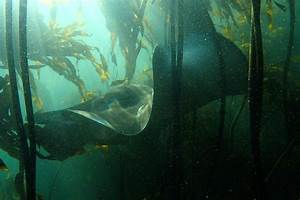 The Wild Beneath the Waves - Africa Geographic Magazine