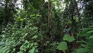 Contoh Contoh Ekosistem Hutan