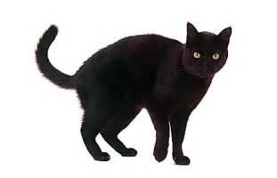 4 black cat black cat information