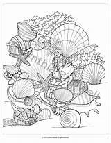 Coloring Seashells Shells Sea Adult Seashell Printable Patterns Para Colouring Sheets Instant Mermaid Drawing Mandalas Colorear Dibujos Mar Colorful Mandala sketch template
