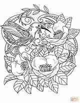 Coloring Flowers Hummingbird Pages Hummingbirds Flower Printable Drawing Birds Floral Adult Supercoloring Detailed Books Mandala Categories sketch template