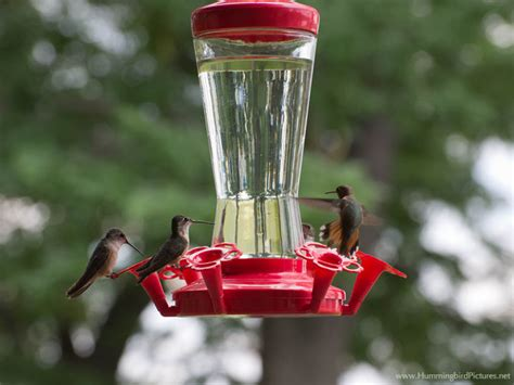 welcoming and attracting hummingbirds to your yard james