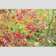 Bild 2 Aus Beitrag Herbstbilder