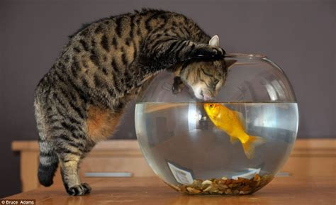 cat and fish give us a you just bowl me cat makes friends