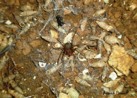 ragno in casa ragni in casa