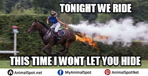 High Horse Meme - horse memes