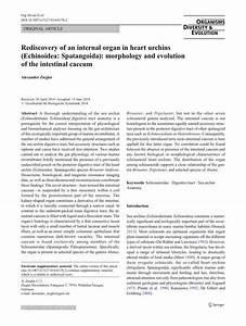Rediscovery Of An Internal Organ In Heart Urchins