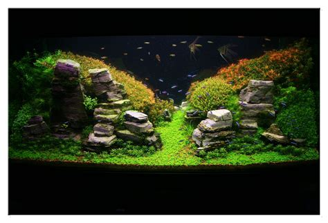 Aquascaping Techniques by January 2011 Aquascape Of The Month Peruvian Nights