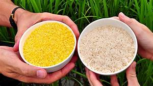 Golden Rice  The Gmo Crop Greenpeace Hates And