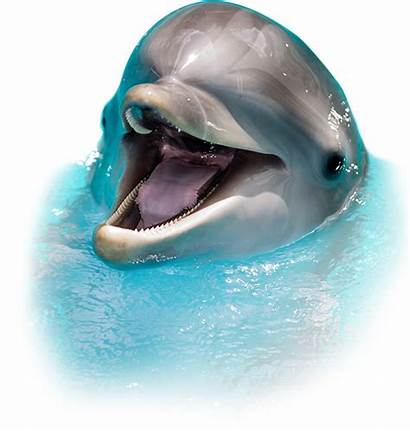 Dolphin Sea Screamer Clearwater Fish Tours Clipart