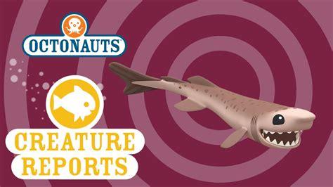 octonauts creature reports cookiecutter shark youtube