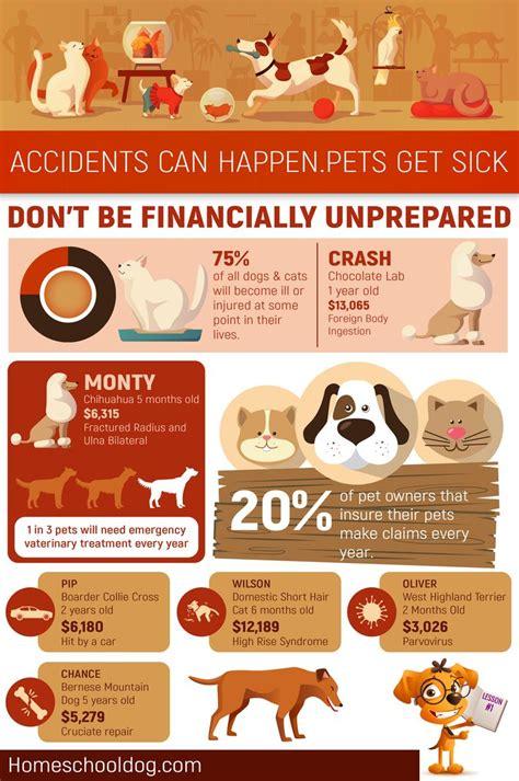 Best pet insurance for 2020. The best pet insurance в 2020 г (с изображениями)
