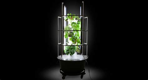 Growing Tomatoes Indoors (is It Worth It?